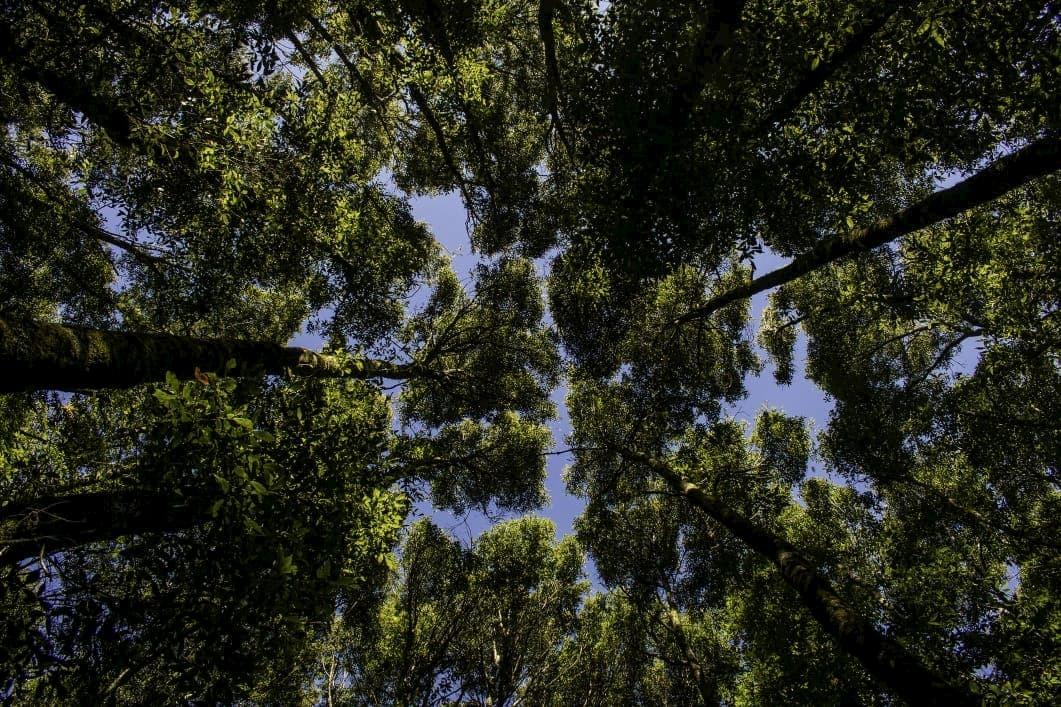 Llano de la garza cabaas la trinidad xilitla