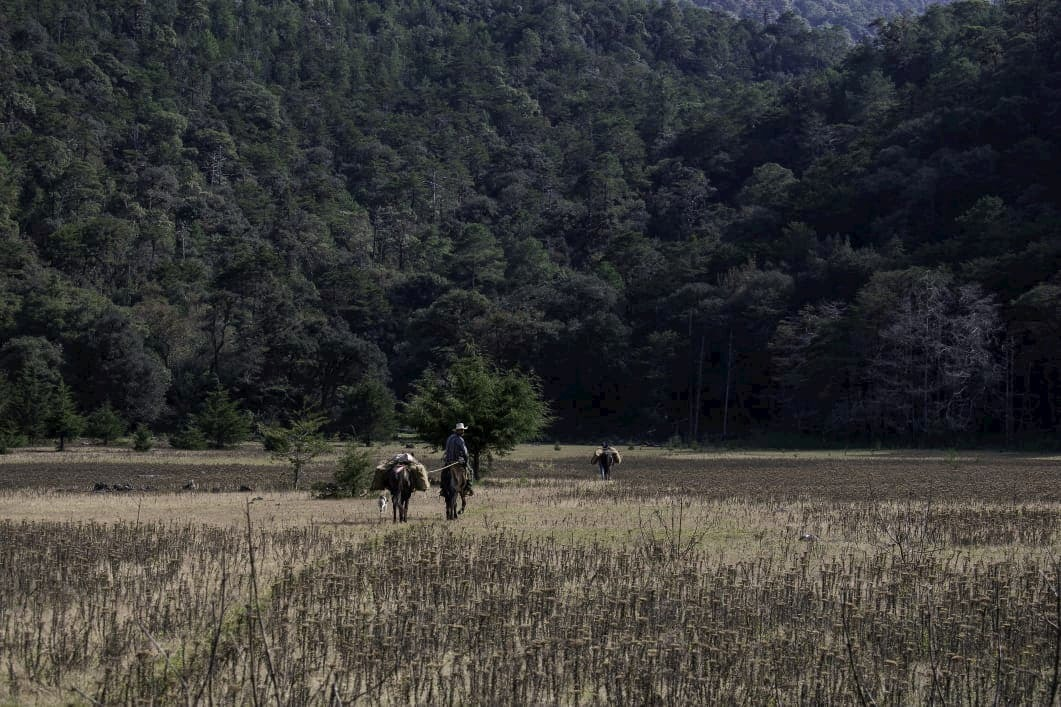 Llano del conejo cabaas la trinidad xilitla
