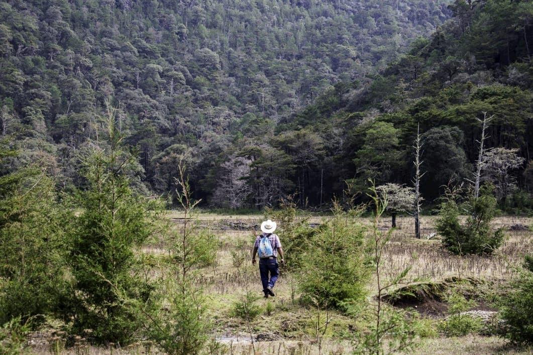 Llano del conejo la trinidad xilitla